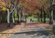 Fall at SUNY Purchase