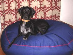 Hi Kara The bed arrived on Friday! it is fantastic; took Aston a little while to get used to the feel and the noise but now we can hardly get him out of it, he almost prefers it to the couch! Pet Beds, Dog Bed, German Shorthaired Pointer, Large Dogs, Kara, Pointers, Friday, Couch, Pets