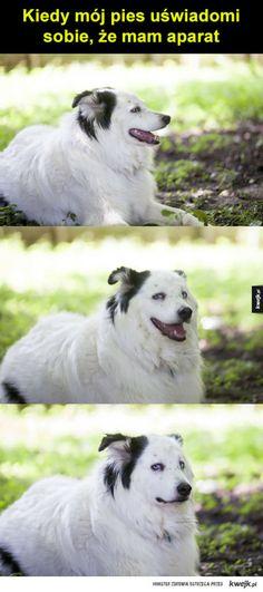 #pies #piesel #zaskoczenie #fotografia #kwejk