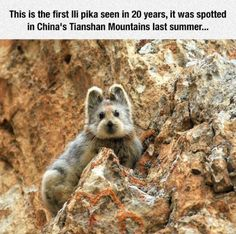 awesome That Is A Fluffy Creature. Check more at http://10ztalk.com/2016/11/02/that-is-a-fluffy-creature/