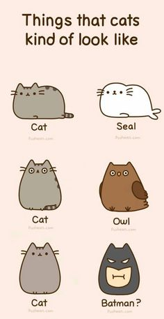 things that cats kind of look like