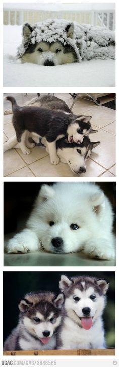husky's... by trudy
