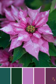 ZJ Colour Palette 279 #colourpalette #colourinspiration