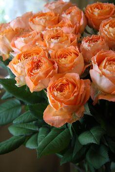 rose Orange romantica