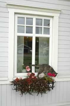 Spröjs | Traryd fönster