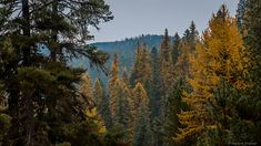 The Priest River Experimental Forest In Idaho Is Unlike Any Other In The World