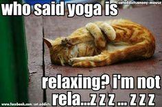 This is main Steve's class! #yogacowboy