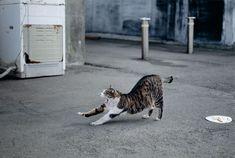 """川崎市市民ミュージアムで開催中の『岩合光昭どうぶつ写真展』で催された、トークショウ「ネコの撮り方」をレポート。猫に対する愛情たっぷりの岩合さんが、猫の撮影方法の秘訣を教えてくれました。   猫とのコミュニケーションが大事 「沢山の動物を撮影していますが、僕が一番最初に作ったのは猫の写真集です。だから、猫についてはとても強い思いがあるんです。一般的に野良猫といっても地域によって、猫の表情や動き方は全く異なります。人が穏やかな場所では、猫も穏やかな表情をみせてくれます。特に坂道の多い場所では、人の動きがゆっくりとなるので、猫の動きもゆっくりしている。また、道が細く車が入れないような所は、道の真ん中に寝っころがってくつろいでいてますよね。そういうリラックスした猫たちは、""""おはよう""""と声をかけると、きちんと返事をしてくれるんです」  どんなカメラや機材が必要?…"""