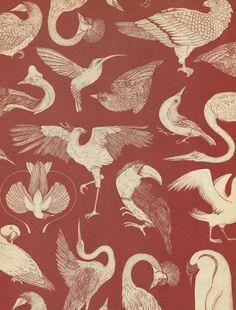 Birds wallpaper by Katie Scott from Animalium