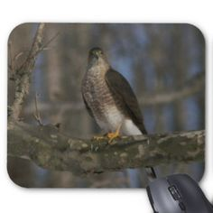 Hawk Mousepad