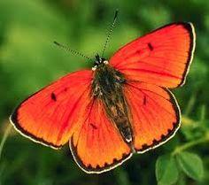 mariposas de verdad volando - Buscar con Google