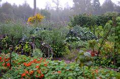 Det finns en mängd sätt att bygga en köksträdgård på. Här är ett enkelt förslag enligt principen billigast möjliga med minsta möjliga arbetsinsats.
