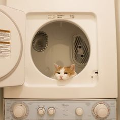 """I hate to be a wet blanket (no pun intended) on all the """"cute"""" pix of kitties in. - I love cats :-) - Kitty kit Cat Aesthetic, Beige Aesthetic, Animals And Pets, Funny Animals, Cute Animals, Crazy Cat Lady, Crazy Cats, I Love Cats, Cool Cats"""