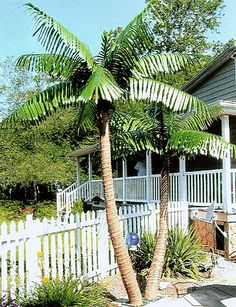 Read our blog to find out more about enhancing your pool, beach or park with artificial palm trees. Use Tropical Palm Trees as your number one resource.