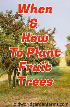 Find Out When The Best Time Is To Plant Fruit Trees And How To Do It Fruit Fruittree Appletree Fruit Trees Backyard Planting Fruit Trees Fruit Tree Garden