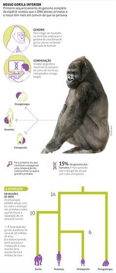 """Pergunte ao Evolucionismo, A reportagem era essa """"Embora haja evidências de..."""