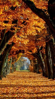 Image uploaded by Find images and videos about beautiful, nature and autumn on We Heart It - the app to get lost in what you love. Fall Wallpaper, Nature Wallpaper, Halloween Wallpaper, Autumn Scenes, Autumn Aesthetic, Autumn Photography, Fall Pictures, Beautiful Landscapes, Beautiful Places