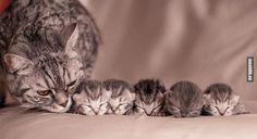 20 uhket kassimammat poseerivad oma ülinunnude järglastega!