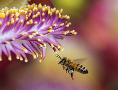 Study Shows Honeybees Attracted to Fungicides  Test of Fungicides, Herbicides and Naturally Occurring Chemicals