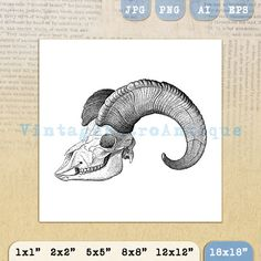 Goat Skull with Horns Printable Graphic by VintageRetroAntique