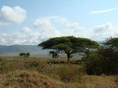 https://flic.kr/p/aobx69 | Tanzania Area Conservación Ngorongoro