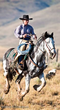 American Paint Horse western quarter paint horse paint pinto horse Indian pony solid tovero overo frame sabino tobiano rabicano #Cowgirls