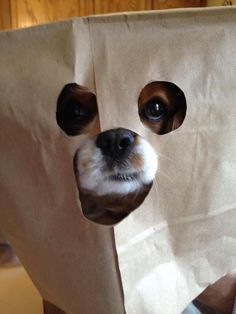 #cute #dog,,,Nobody will guess its me under here,,,,