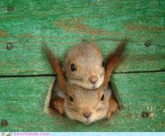 Squirrel!  Squirrel!