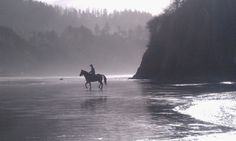 Horseback riding in Oregon on the Pacific Coast on the Willamette Ride