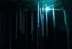 La cueva Waitomo de Nueva Zelanda