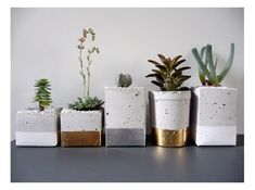 lush interiors: Betontöpfe --- concrete planters