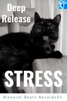 B Rain, Binaural Beats, Thing 1, Release Stress, Nighty Night, Sea Waves, Deep, Night Time, Bedtime