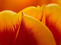 How to Take Better Flower Photos. Go to http://robflorexplore.com to get more photo tips & tricks.