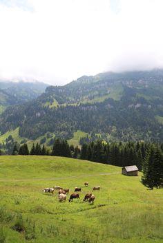 Vorarlberg - 5 lustige Fakten über den Bregenzerwald