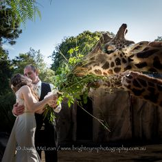 melbourne zoo wedding photo, giraffe experience.  Awesome idea! Bright Eyes Photography