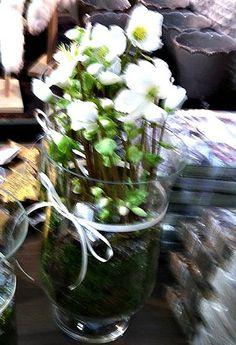 Julerose med mose Glass Vase, Plants, Home Decor, Dekoration, Decoration Home, Room Decor, Plant, Home Interior Design, Planets