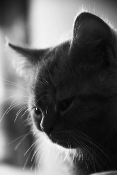 """""""All cats can see future, and can see echoes of the past."""" --Neil Gaiman"""