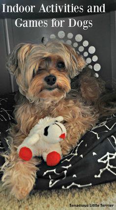 Indoor Activities and Games for Dogs ~ Tenacious Little Terrier