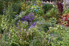 Gorgeous fall autumn flower garden with foliage plants, shrubs, picket fence | Plant & Flower Stock Photography: GardenPhotos.com