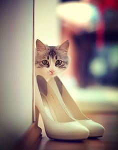 kitty and ladies heels