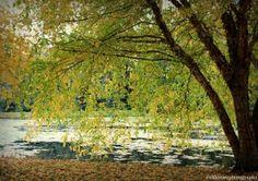 Fall Photography | University of Idaho Aboretum | Moscow, ID | https://clfleenerphotography.wordpress.com/2016/02/17/university-of-idaho-aboretum/