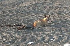 Even though he had decomposed in the desert, she wouldn't leave the side of her best friend (this has a happy ending).