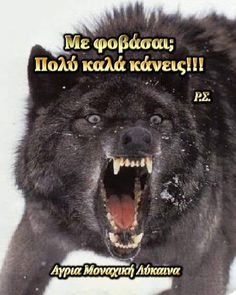 Wolf Love, Greek Quotes, Love Life, Movie Posters, Movies, Films, Film Poster, Cinema, Movie