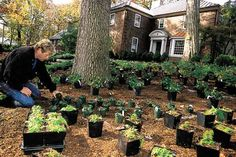 planting ground cover plants. groundcovers do a lot more than simply cover bare soil. Part of a vast universe of versatile and problem-solving plants, they range from feathery grasses that never need mowing to soggy-soil-loving ferns to full-sun perennials that blanket hard-to-tend hills with fragrant blooms. Some groundcovers even withstand foot traffic, making them ideal as filler between stepping stones or as a substitute for a lawn.