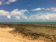Praia dos Carneiros, em maré baixíssima e verde esmeralda :: Tamandaré/PE