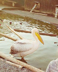Birds, Water, Animals, Gripe Water, Animales, Animaux, Bird, Animal, Animais