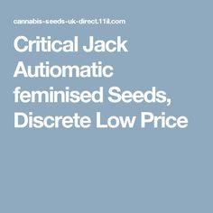 Critical Jack Autiomatic feminised Seeds, Discrete Low Price