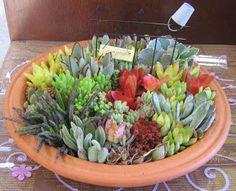 """""""Muito fáceis de cuidar as suculentas ficam lindas em todos os tipos de vasos, incontáveis arranjos podem ser combinados em todos os t..."""