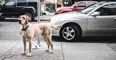 La felicidad en el cielo debería contemplar que allí también estén nuestros perritos. Ésta es una cuestión que despierta muchas sensibilidades...