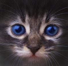 beautiful, kitty